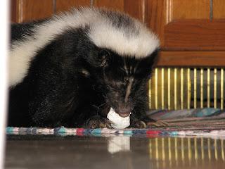 ملف كامل عن اجمل واروع الصور للحيوانات  المفترسة   حيوانات الغابة  130153394_38e8bac0a3