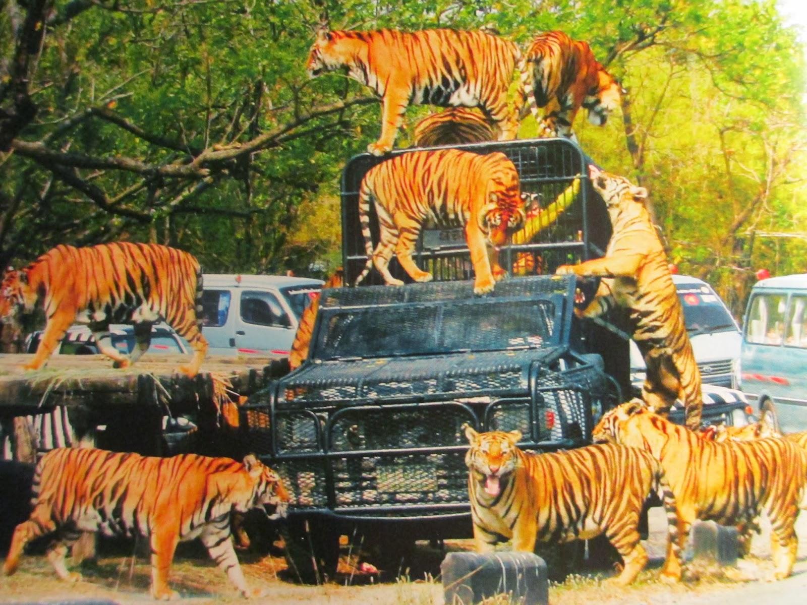 manuelimson: Safari World Bangkok