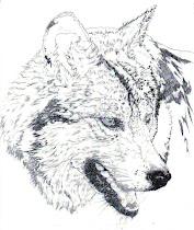 'Wolf Study'