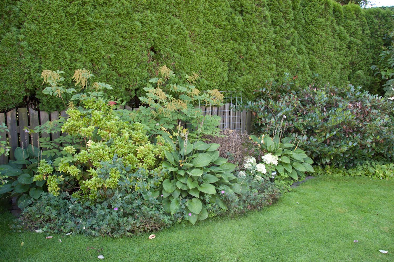 Klorofyllidyll: liten rundtur i min trädgård del1