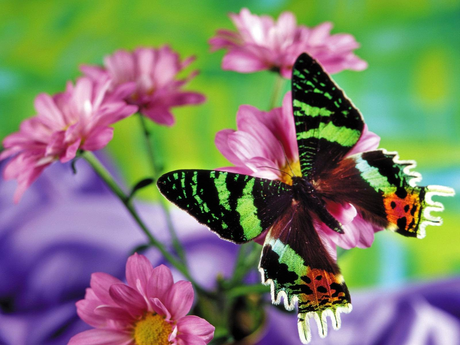 Flower and butterfly free nice images