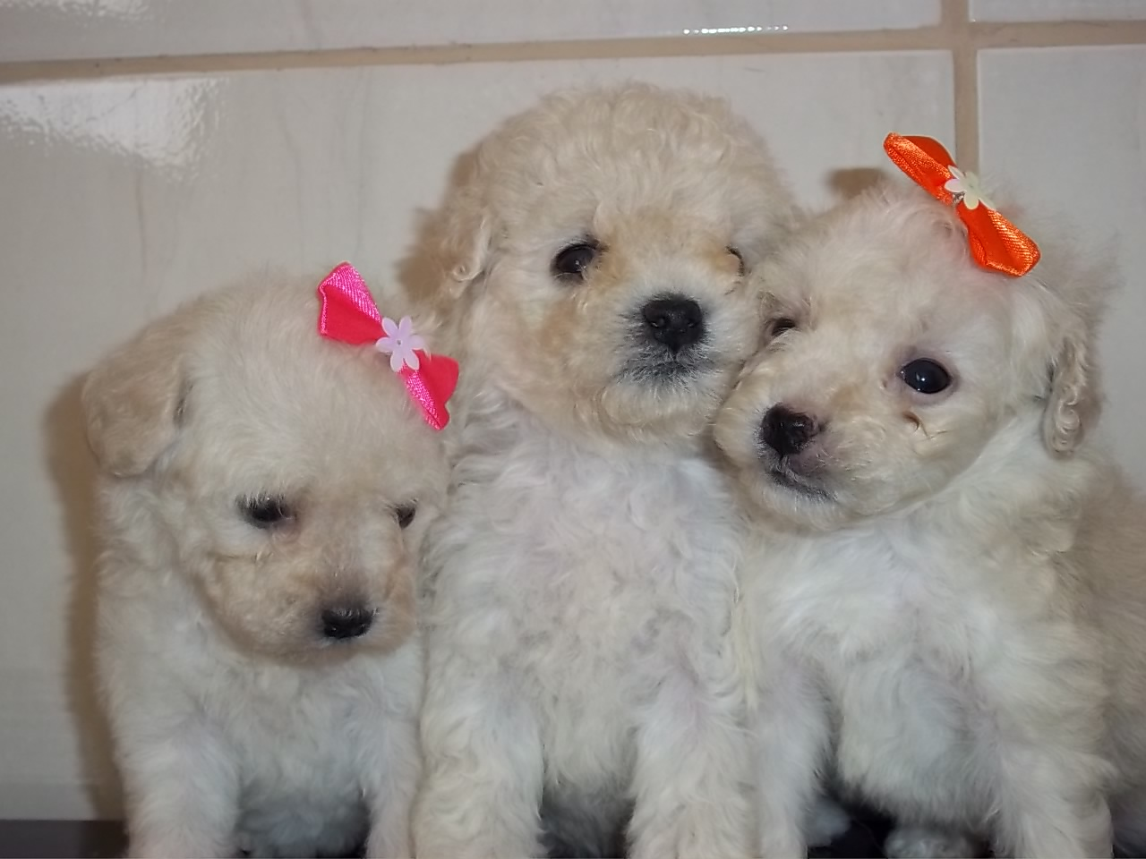 adopt a pet As Melhores Raças de Cães para Família