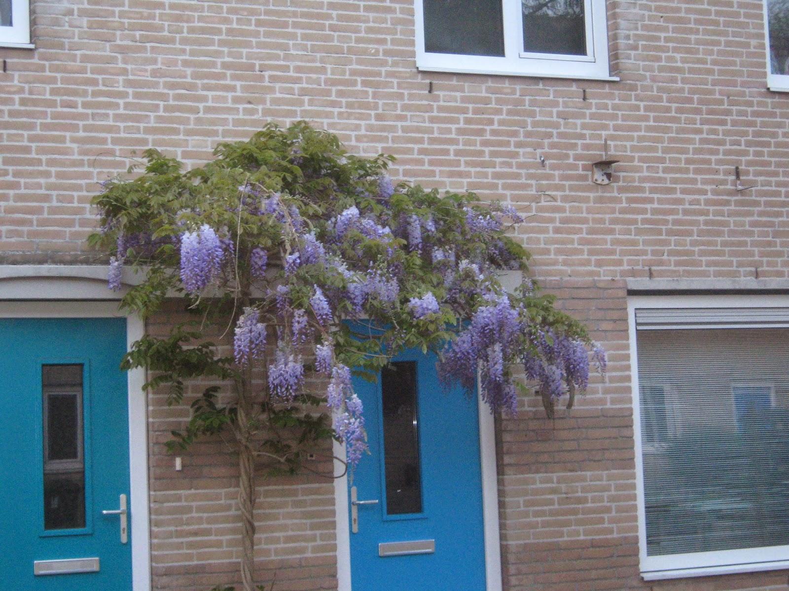Beijumnieuws een mooi entree van je huis - Deco entree in het huis ...