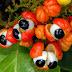 Projeto visa aumento e diversificação da produção no interior do Amazonas