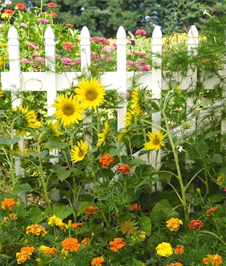 Two men and a little farm inspiration thursday white picket fence inspiration thursday white picket fence with flowers mightylinksfo