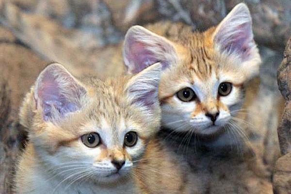 Коты в коране