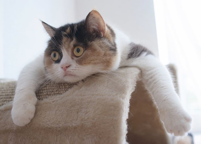 funny cat pictures, cute cat with funny face