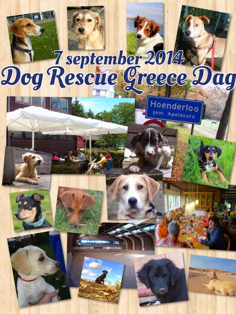 Dog Rescue Greece Dag 2014