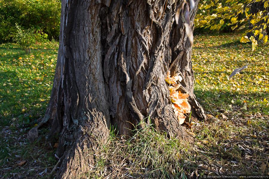 Кора старого дерева в парке Пушкинской усадьбы. Большое Болдино.