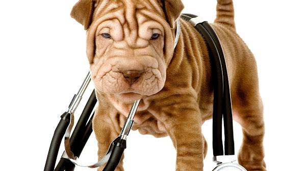Friendly Animal Hospital Huntington Beach