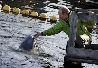 ballena-beluga