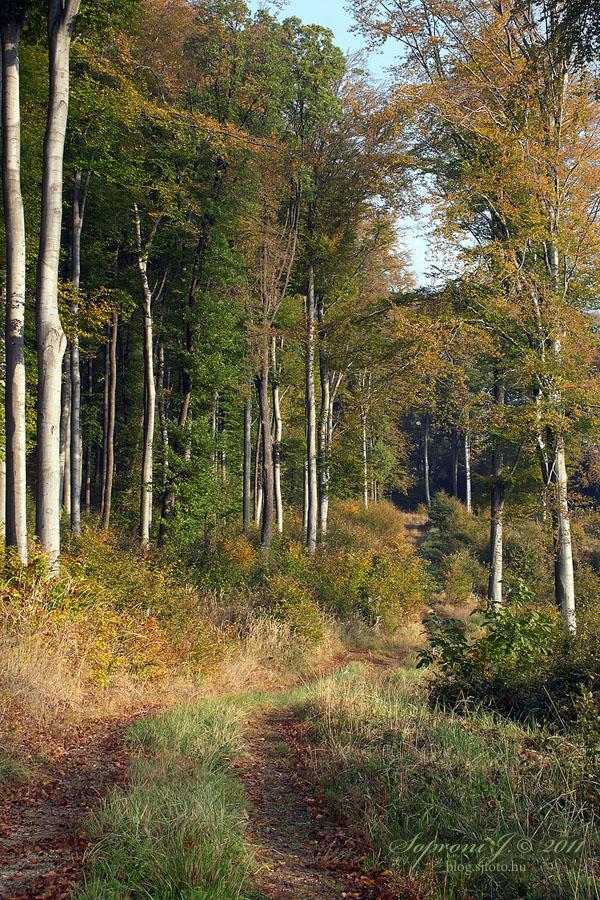 Bükkös (beech forest)