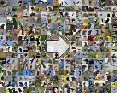 http://350.birdingafrica.com/
