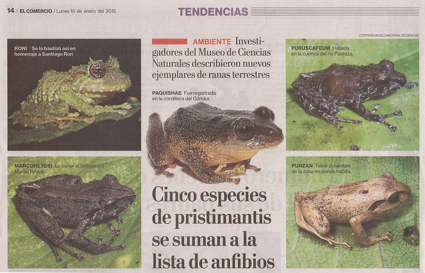 Blog Anfibios Ecuador: Cinco nuevas especies de ranas endémicas de ...