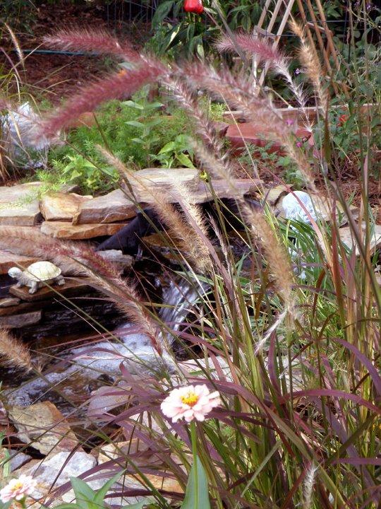 My Carolina Yard Water Garden Hints