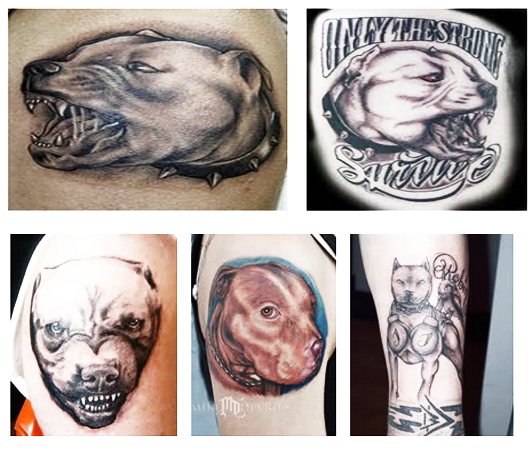 1the best of pitbull tattoo tips on getting your tattoo for Tattoos near me open late