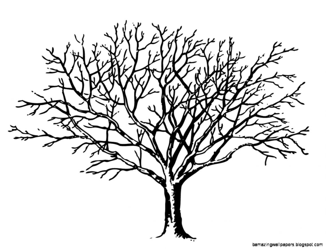 Winter tree clipart black and white   ClipartFest