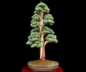 """<img src=""""bonsai16.jpg"""" alt=""""foto bonsai"""">"""