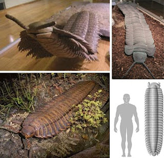 "Largest Land-Dwelling ""Bug"" of All Time the Arthropleura"