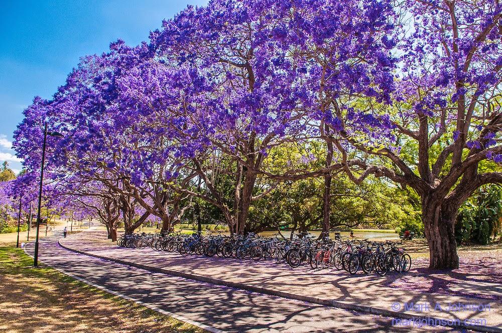 Trees with purple flowers gallery flower decoration ideas trees with purple flowers images flower decoration ideas trees with purple flowers image collections flower decoration mightylinksfo