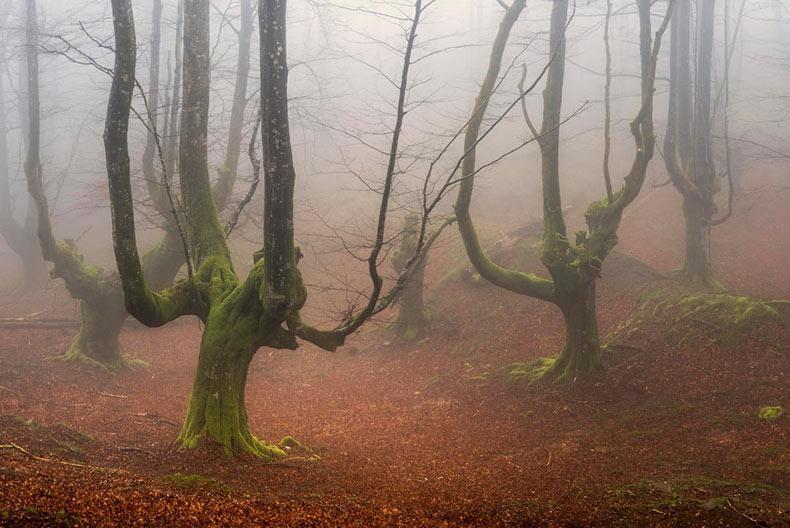 Parque Natural Gorbea: Un bosque místico en España