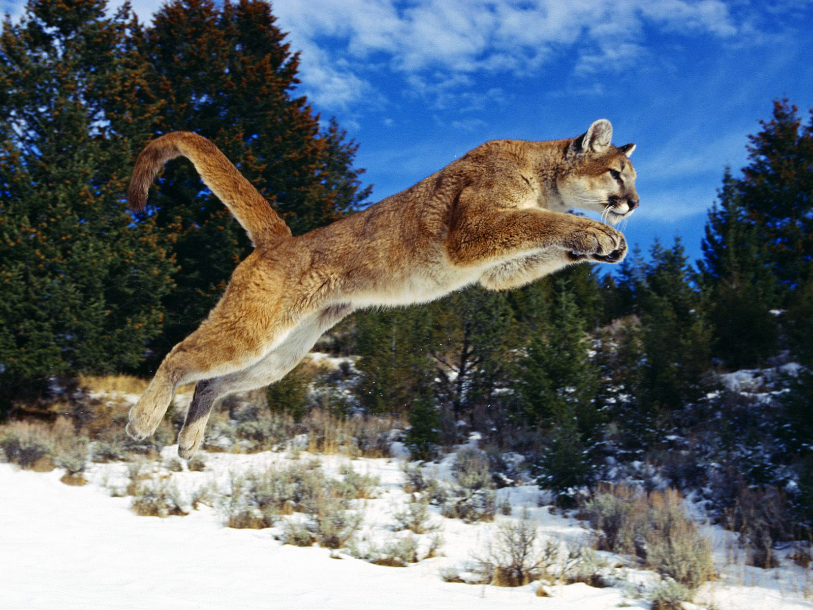 Image Gallary 1: Beautiful Animals Hunting Photos collection