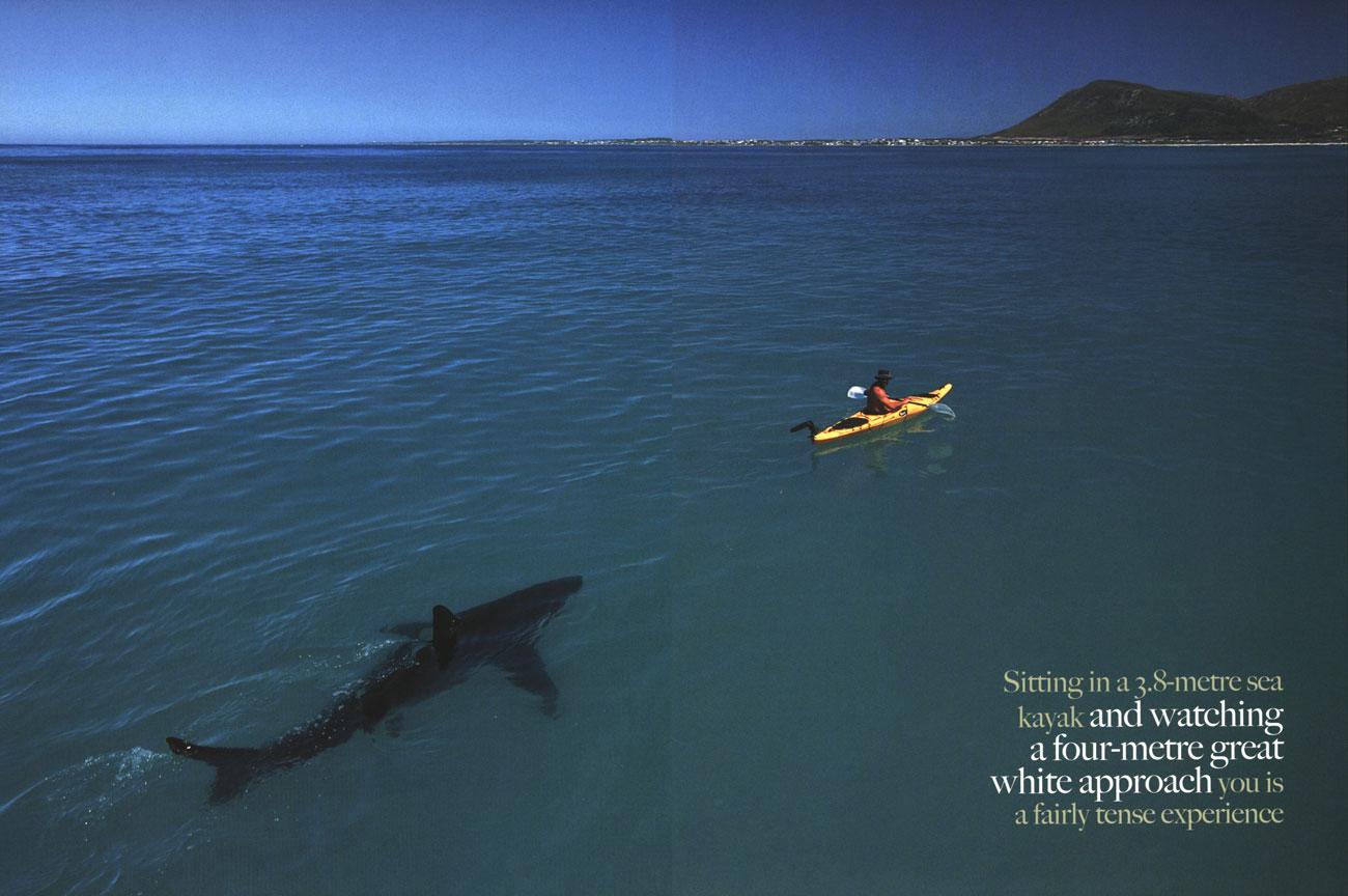 http://3.bp.blogspot.com/--Ajtvwc285w/TnrNL1yHqjI/AAAAAAAAAfI/644SebnJyiI/s1600/shark-3-767347.jpg