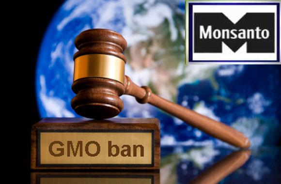 http://hrvatskifokus-2021.ga/wp-content/uploads/2016/03/3.bp_.blogspot.com_-AwHJiI9JaM_UL3jbTivXpI_AAAAAAAACgc_lPz5NXkJ1cg_s1600_Kenya-BANS-All-GMO-Monsanto-Foods.jpg