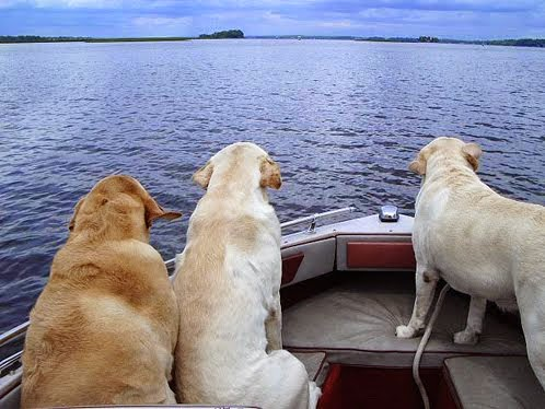 Dogs going for a ride