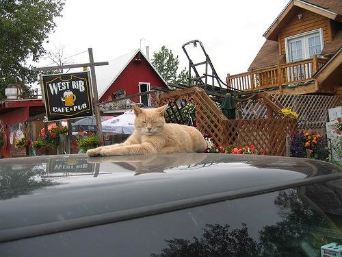 Cat Marks 15 Years as Mayor of Alaska Town