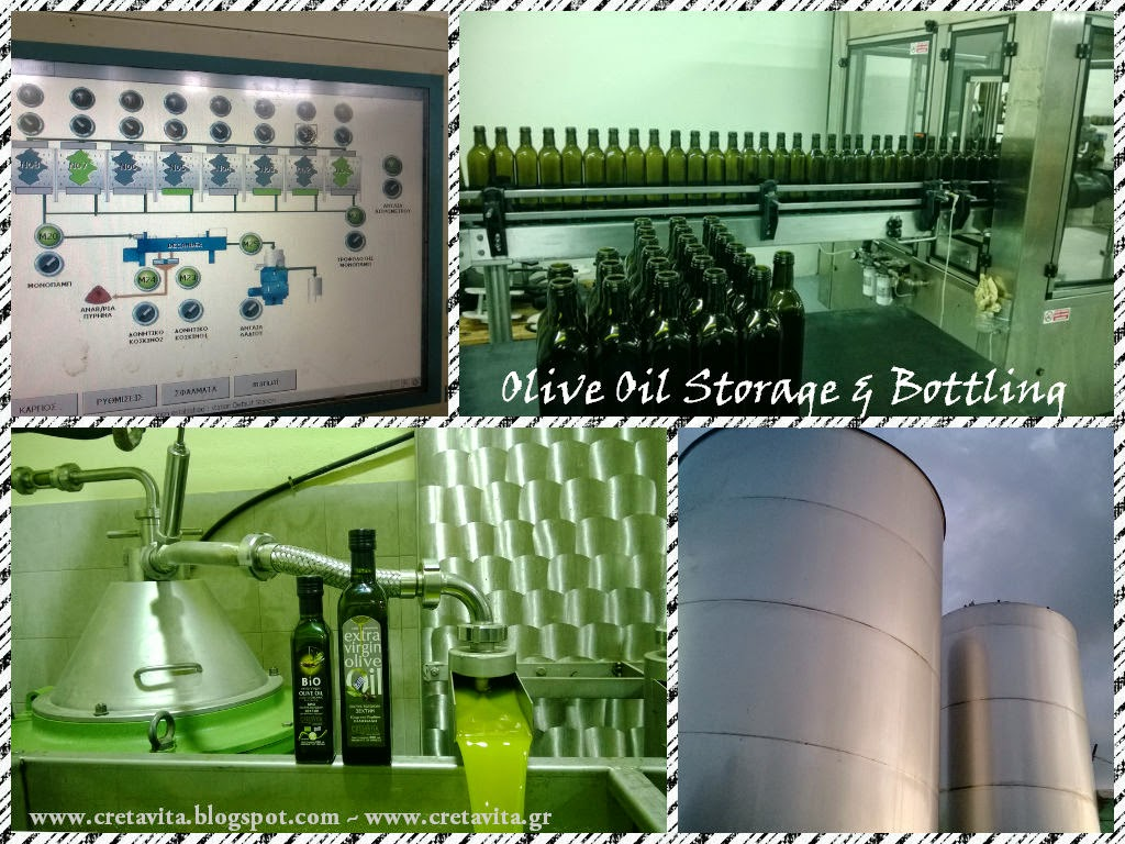 Olive Oil Storage Bottling