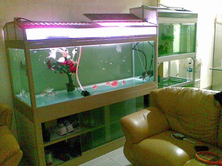 Aquarium konvensional, sangat merepotkan dalam segi perawatan