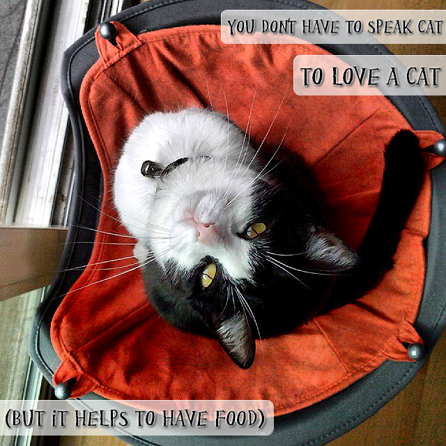 You don't have to speak 'cat' to love a cat....but a little food helps! #GoodlifePet #shop #cbias