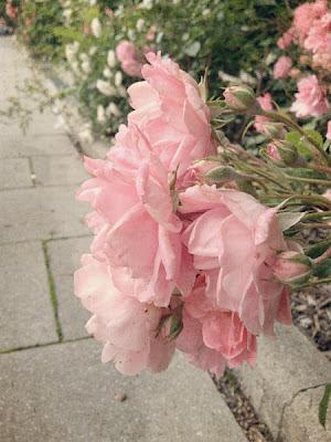 Kim Klassen's textures on pink roses