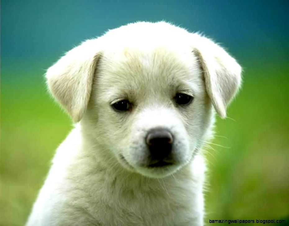 Cute Dog Pictures Pictures