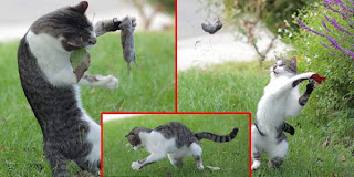 Tips Memotret kucing biar terlihat lucu