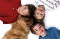 Dog Training For A More Harmonious Household