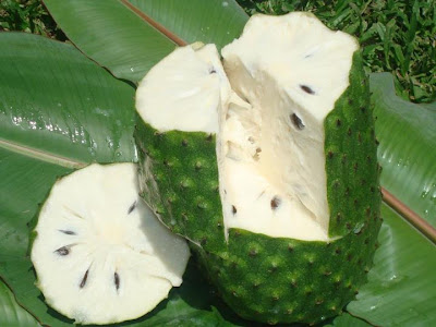 Soursop fruit has High Antioxidant Content