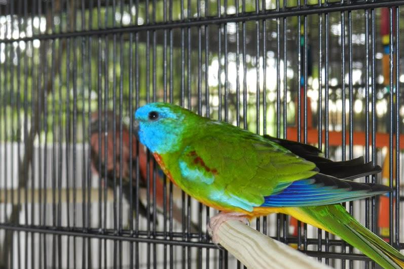 O Mundo das Aves
