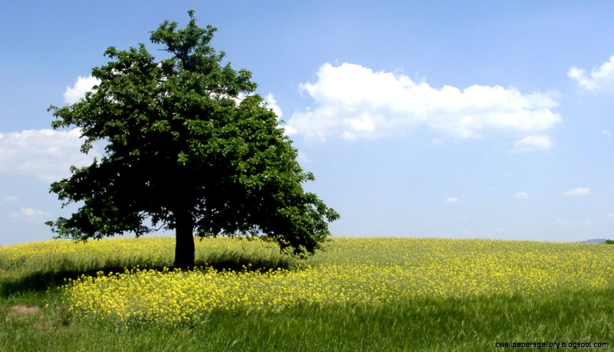Download 1366x768 Summer Tree Wallpaper