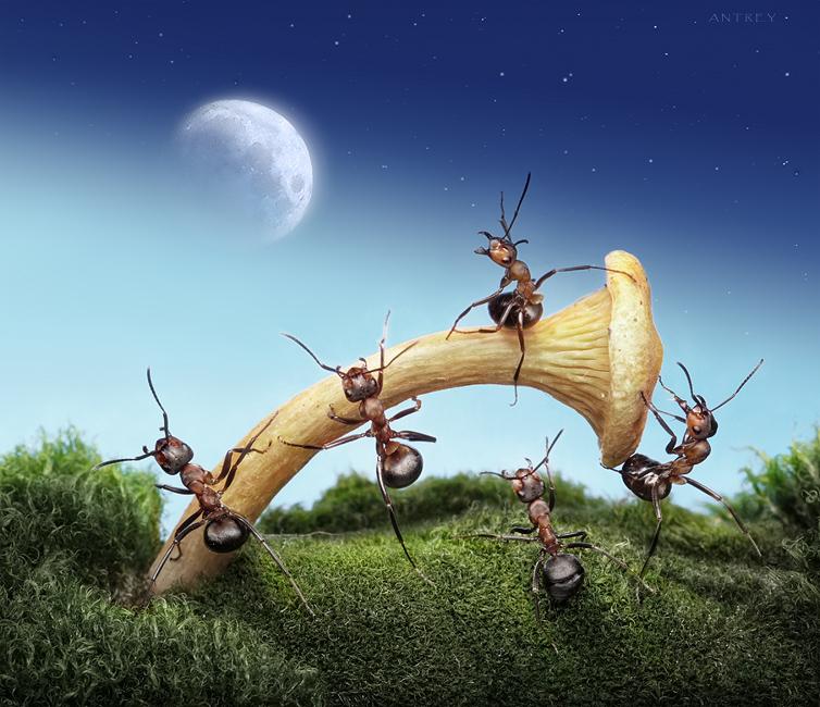 Andrey Pavlov. Historias de Hormigas (Ant Tales)