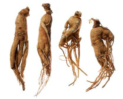 image of root of ginseng, also called as panax ginseng; panax quinquefolium; aralia quinquefolia; radix ginseng; radix panacis quinquefolii, used in the natural herbal treatment of erectile dysfunction