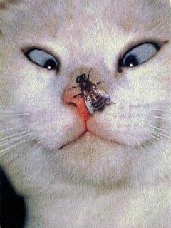 Gato com mosca no nariz