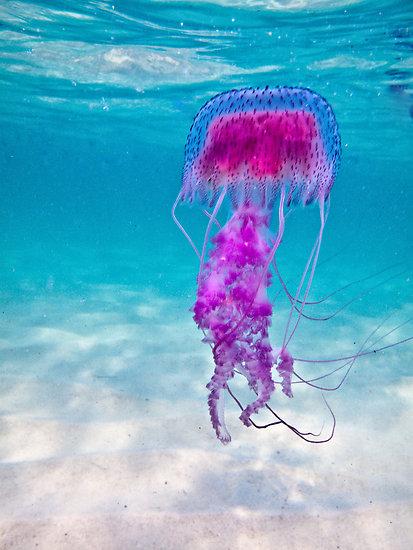 Jellyfish Stingers