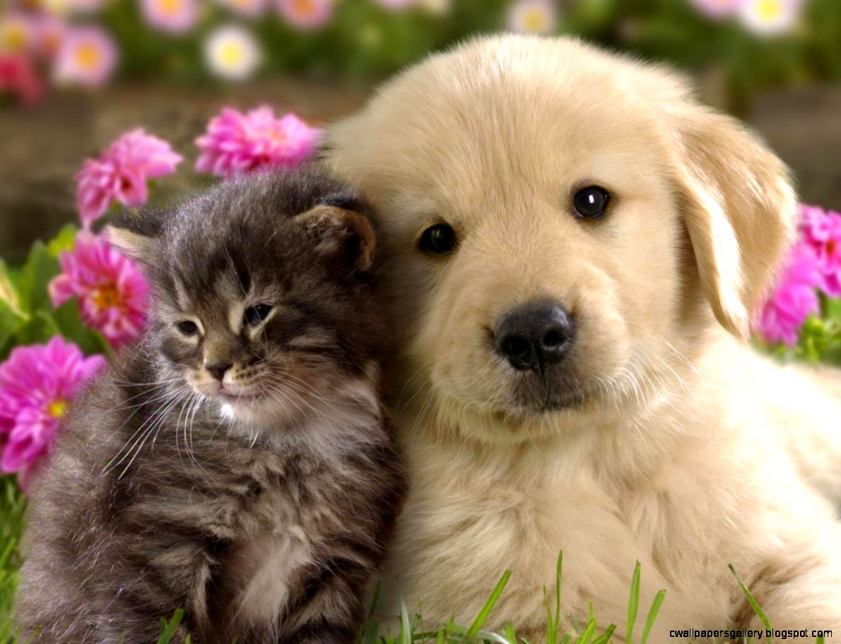 20 best of super cute puppies | kittens cute wallpapers