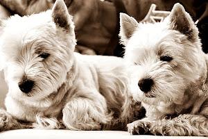 Banchy & Theodor