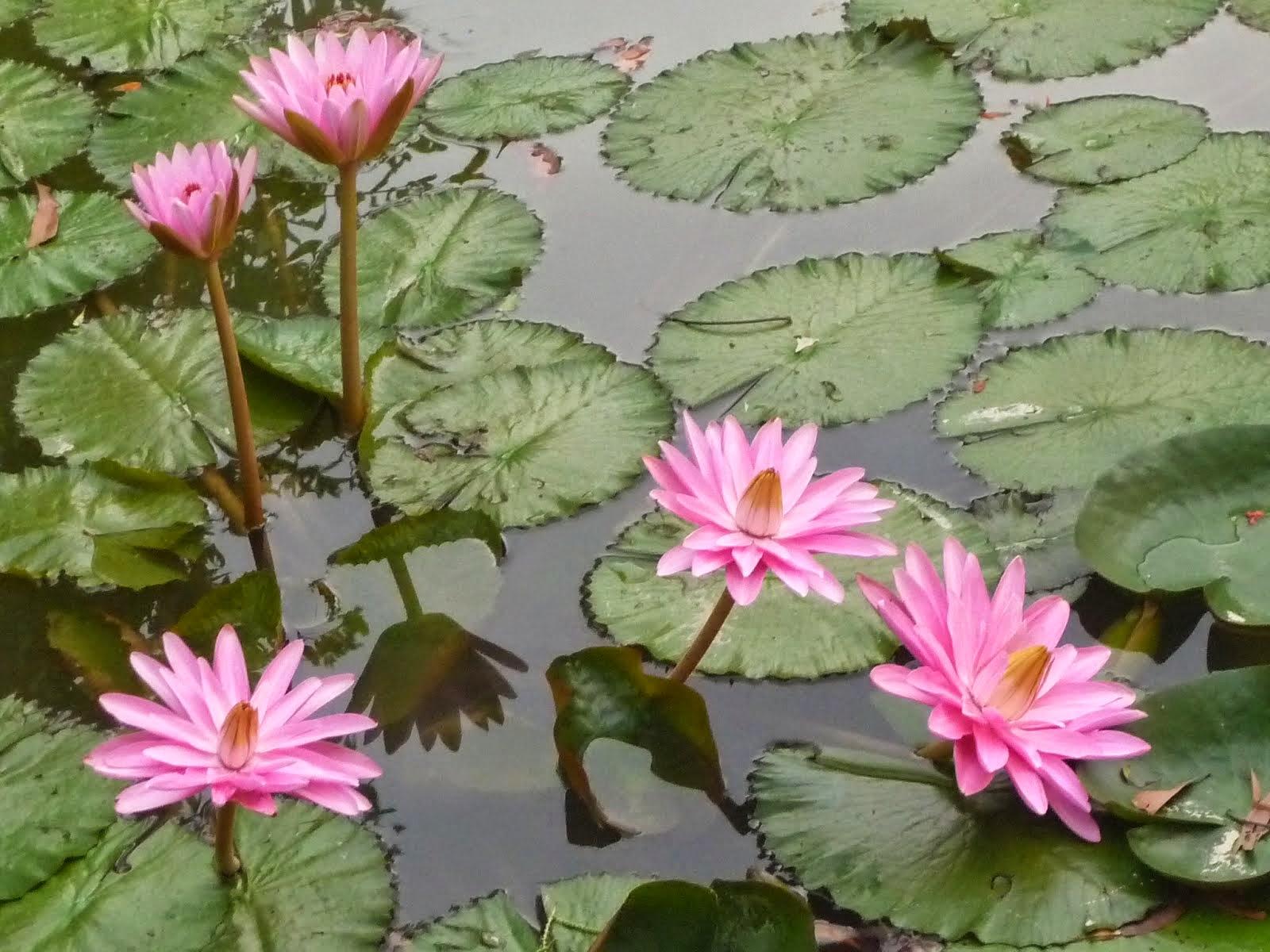 Hoa vườn nhà