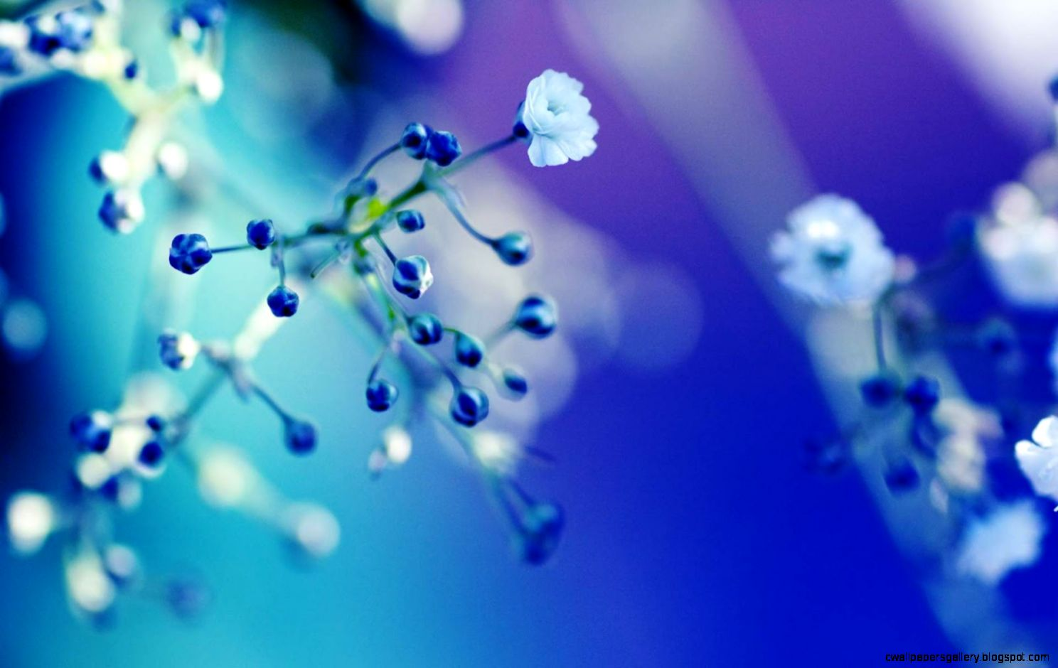 Blue Flowers Desktop Wallpaper   WallpaperSafari