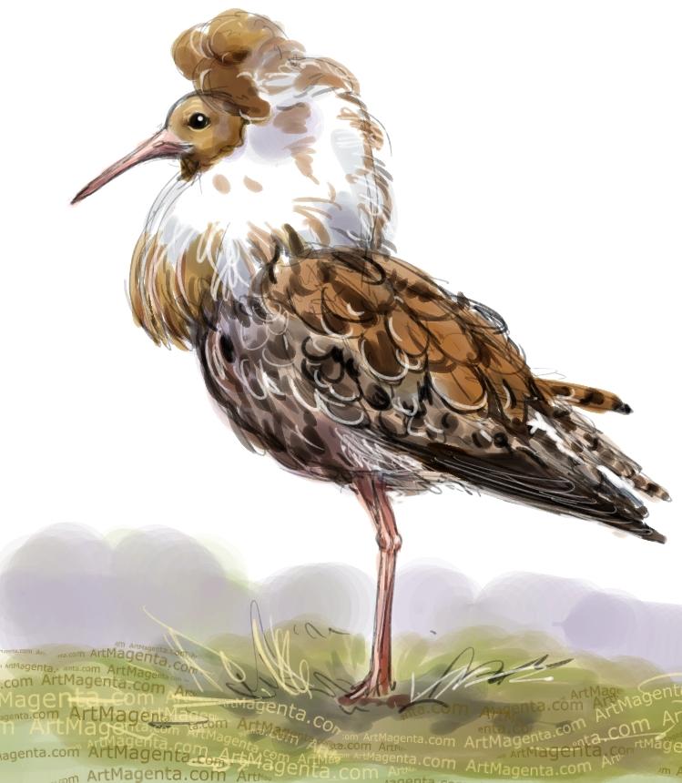 En fågelmålning av en brushane från Artmagentas svenska galleri om fåglar