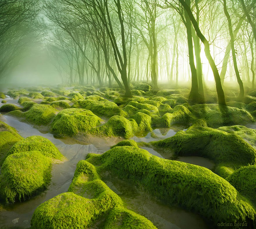 mysterious forests around the world